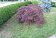 Obrezovanje dreves in grmičevja