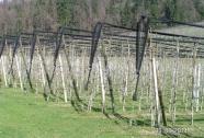 Mreže proti toči v sadovnjakih in nasadih