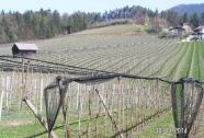 Protitošne zaščite nasadov in sadovnjakov